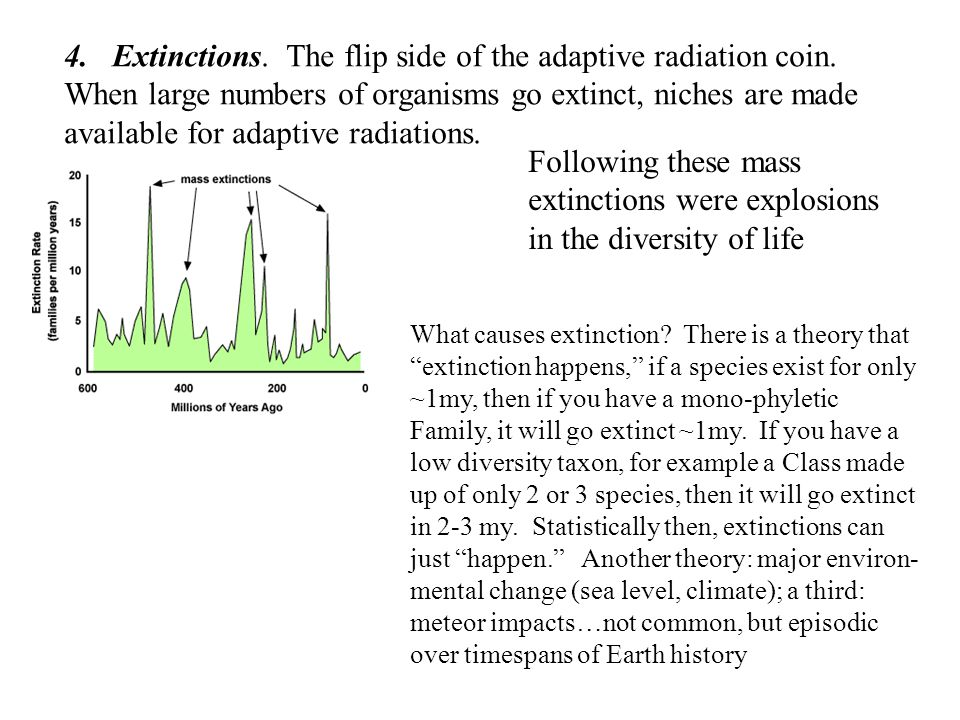 4.Extinctions. The flip side of the adaptive radiation coin. When large numbers of organisms go extinct, niches are made available for adaptive radiat