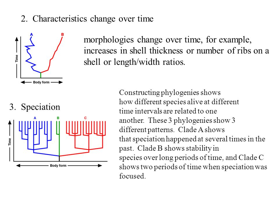 2. Characteristics change over time morphologies change over time, for example, increases in shell thickness or number of ribs on a shell or length/wi