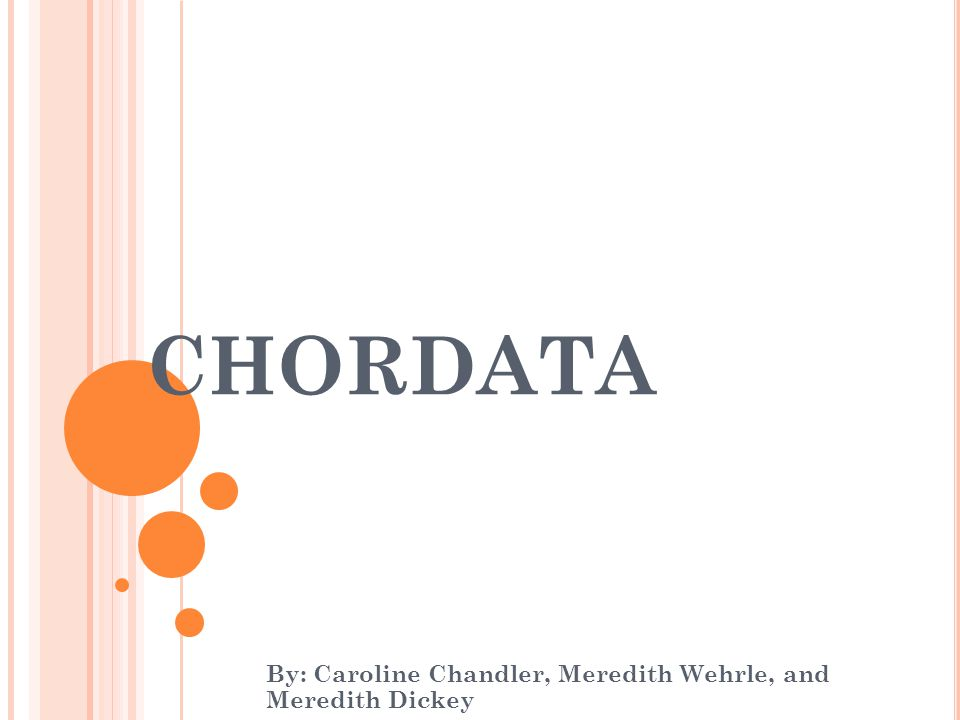 CHORDATA By: Caroline Chandler, Meredith Wehrle, and Meredith Dickey