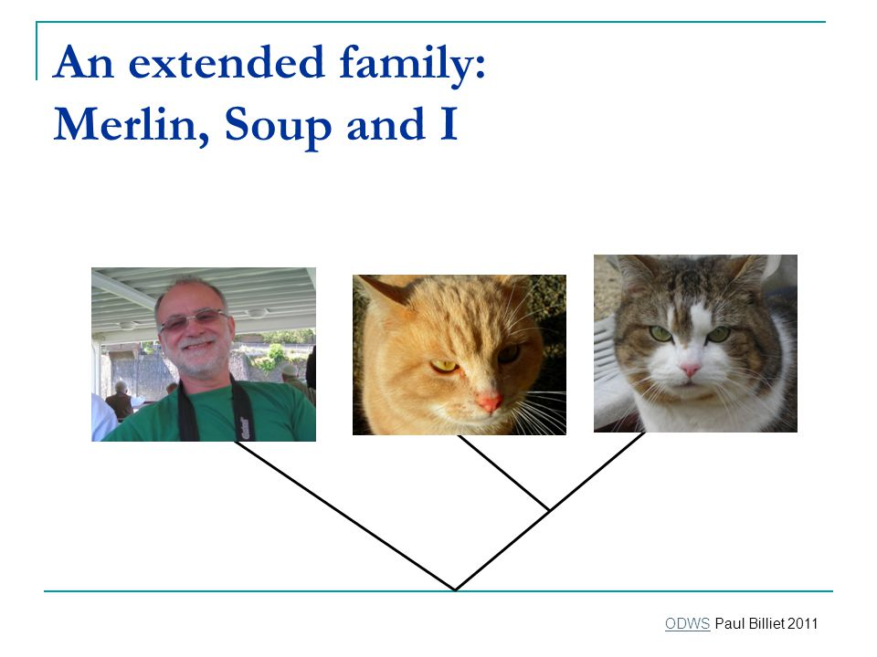 An extended family: Merlin, Soup and I ODWSODWS Paul Billiet 2011