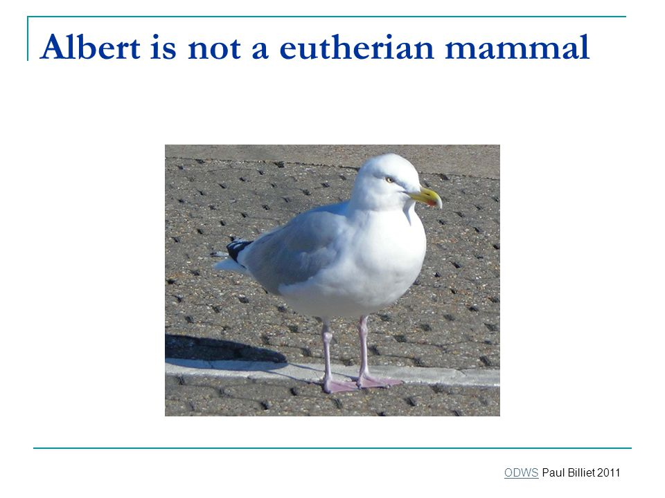 Albert is not a eutherian mammal ODWSODWS Paul Billiet 2011