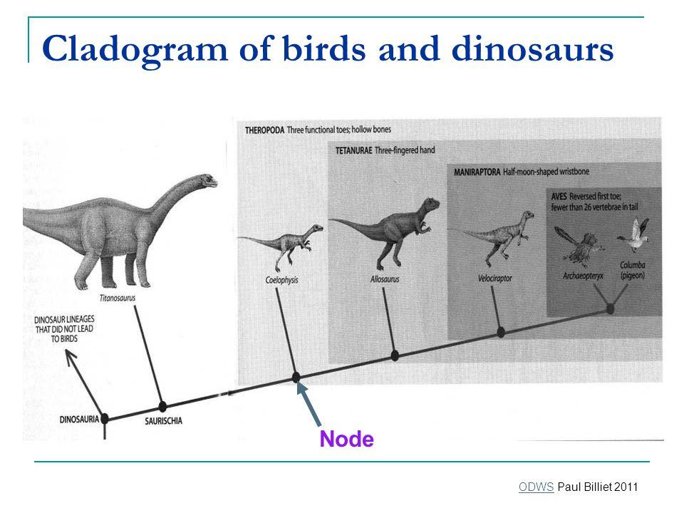 Cladogram of birds and dinosaurs Node ODWSODWS Paul Billiet 2011