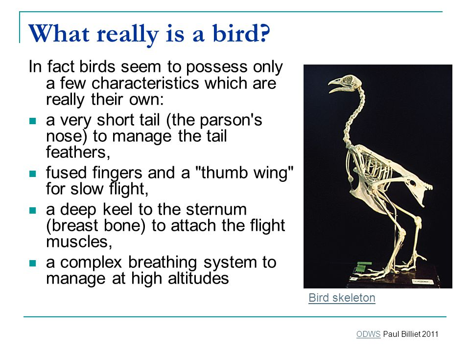 What really is a bird.