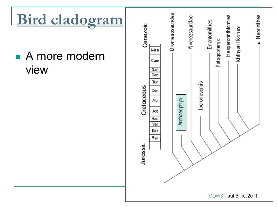 Bird cladogram A more modern view ODWSODWS Paul Billiet 2011