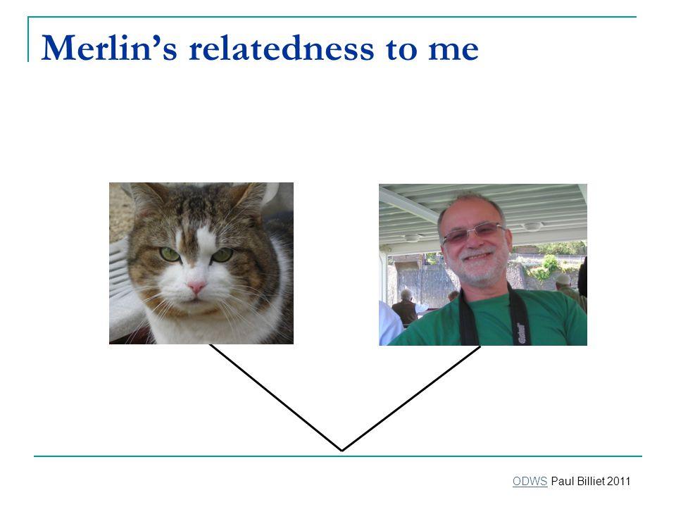 Merlin's relatedness to me ODWSODWS Paul Billiet 2011