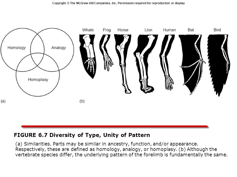 Copyright © The McGraw-Hill Companies, Inc. Permission required for reproduction or display FIGURE 6.7 Diversity of Type, Unity of Pattern  (a) Simil