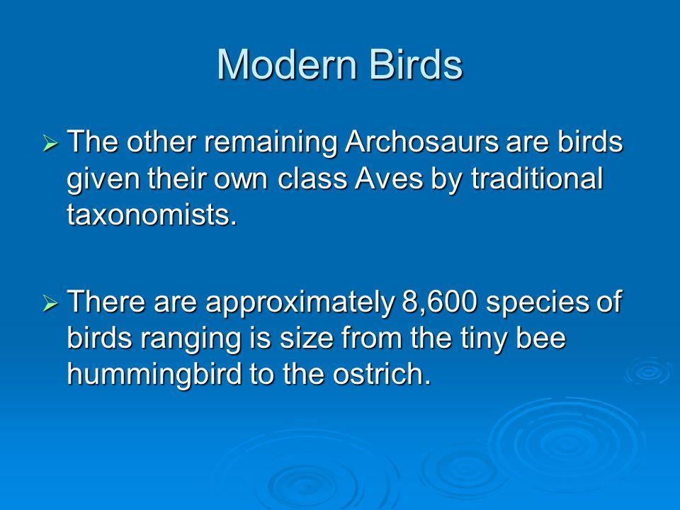 Bennett's Woodpecker http://www.exzooberance.com/virtual%20zoo/they%20fly/woodpecker/ Bennetts%20Woodpecker%20268072.jpg Montane Woodcreeper http://www.birdsinperu.com/images/ fotos%20aves/Montane-Woodcreeper.jpg