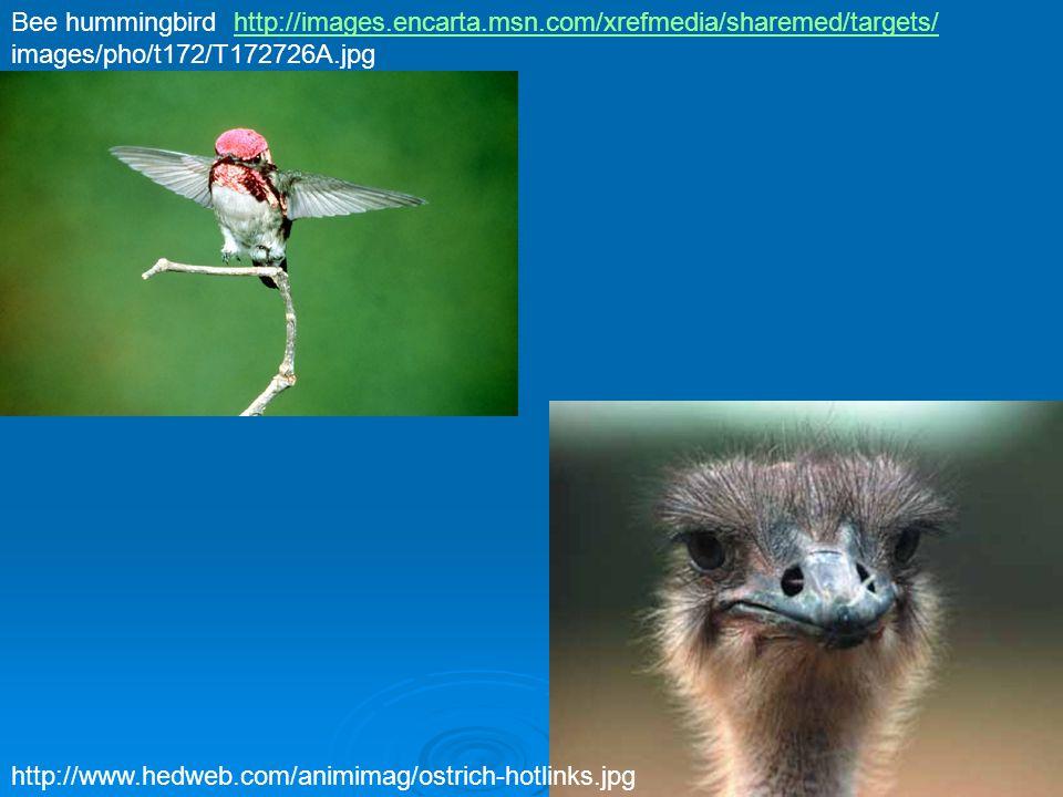 Diversity of birds: major bird orders  Anseriformes – Waterfowl.
