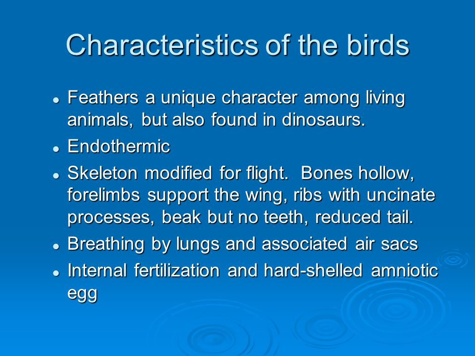 Evolution of birds  Birds evolved from a group of theropod dinosaurs in the Jurassic period.