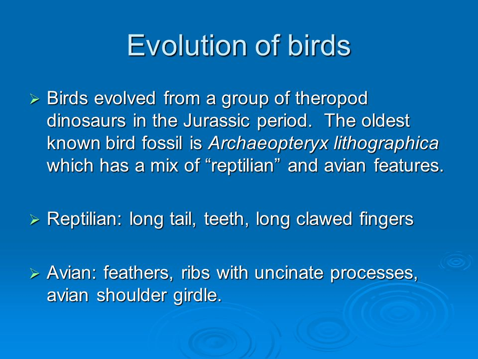 Sensory systems: vision  Most birds have excellent vision and this is reflected in the structure of the brain.