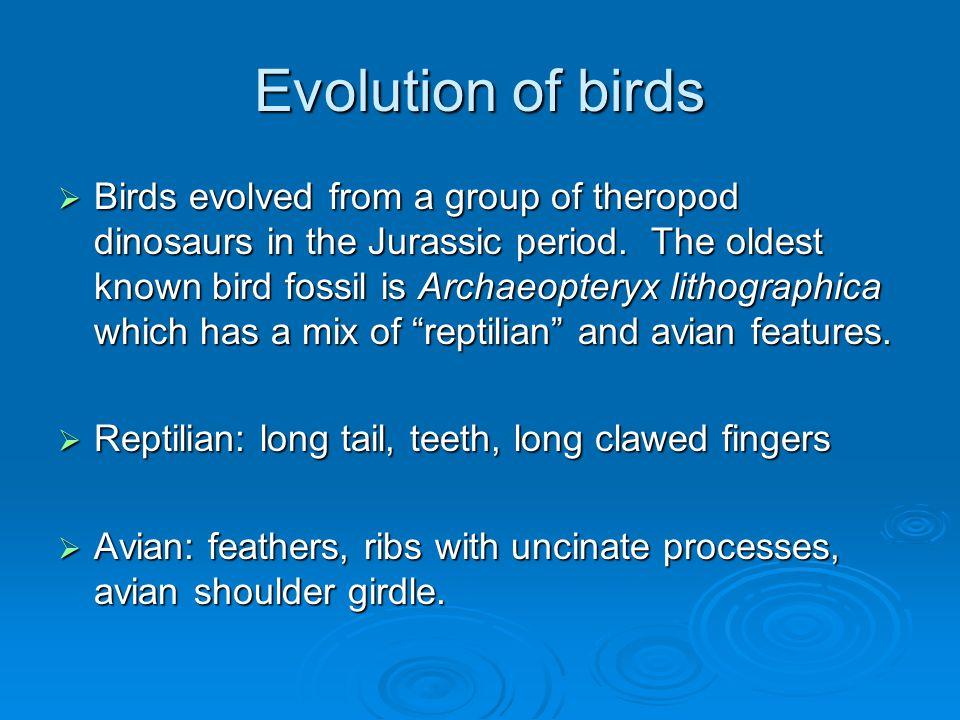 Archaeopteryx (oldest known fossil bird) Jurassic 150mya