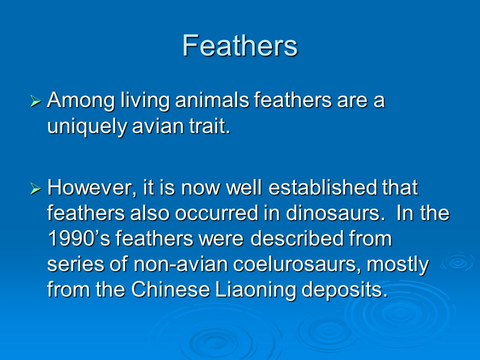 Adaptations for flight  Feathered wing.