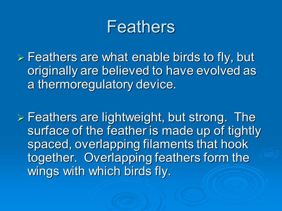 Diversity of birds: major bird orders  Strigiformes – Owls.