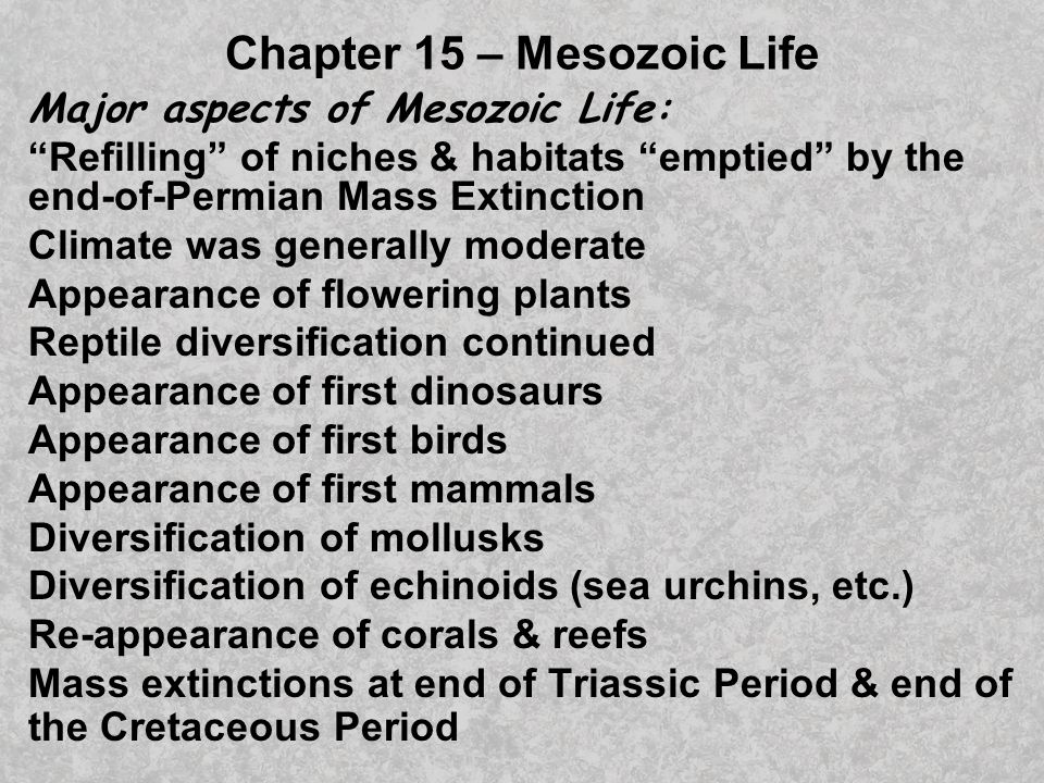 Early Triassic marine survivors included bivalves, gastropods, cephalopods, echinoids (and other echinoderms), and a few brachiopods.