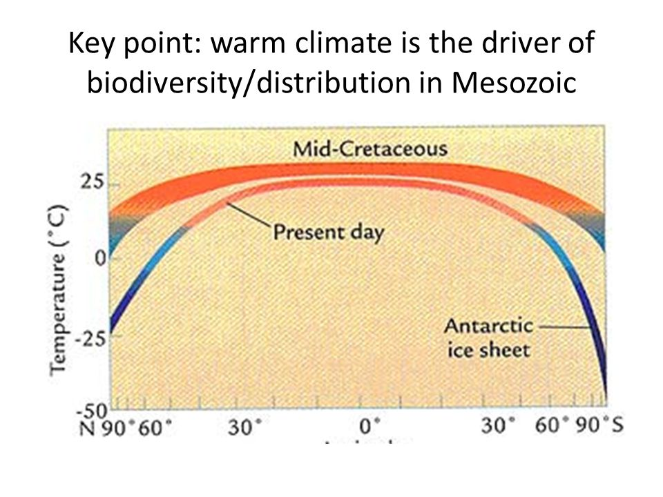 Key point: warm climate is the driver of biodiversity/distribution in Mesozoic