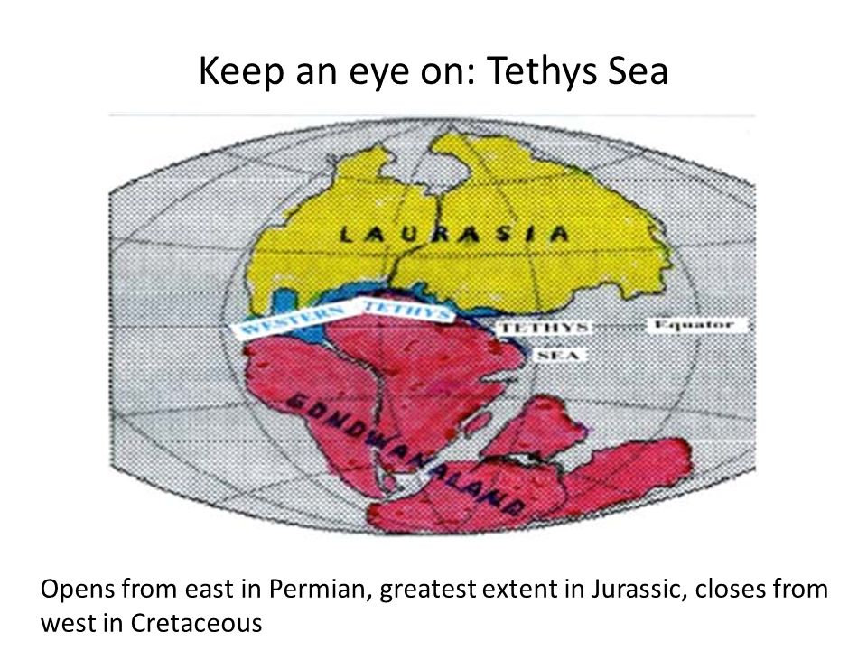 Keep an eye on: Tethys Sea Opens from east in Permian, greatest extent in Jurassic, closes from west in Cretaceous