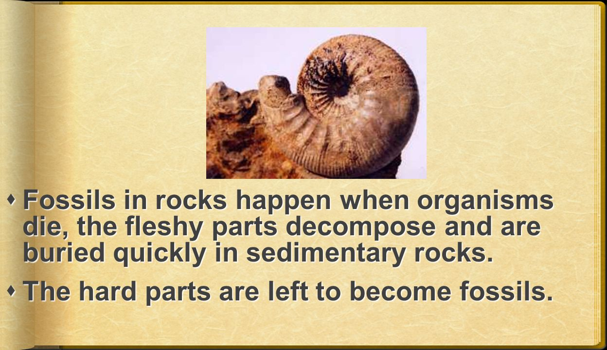  Fossils in rocks happen when organisms die, the fleshy parts decompose and are buried quickly in sedimentary rocks.