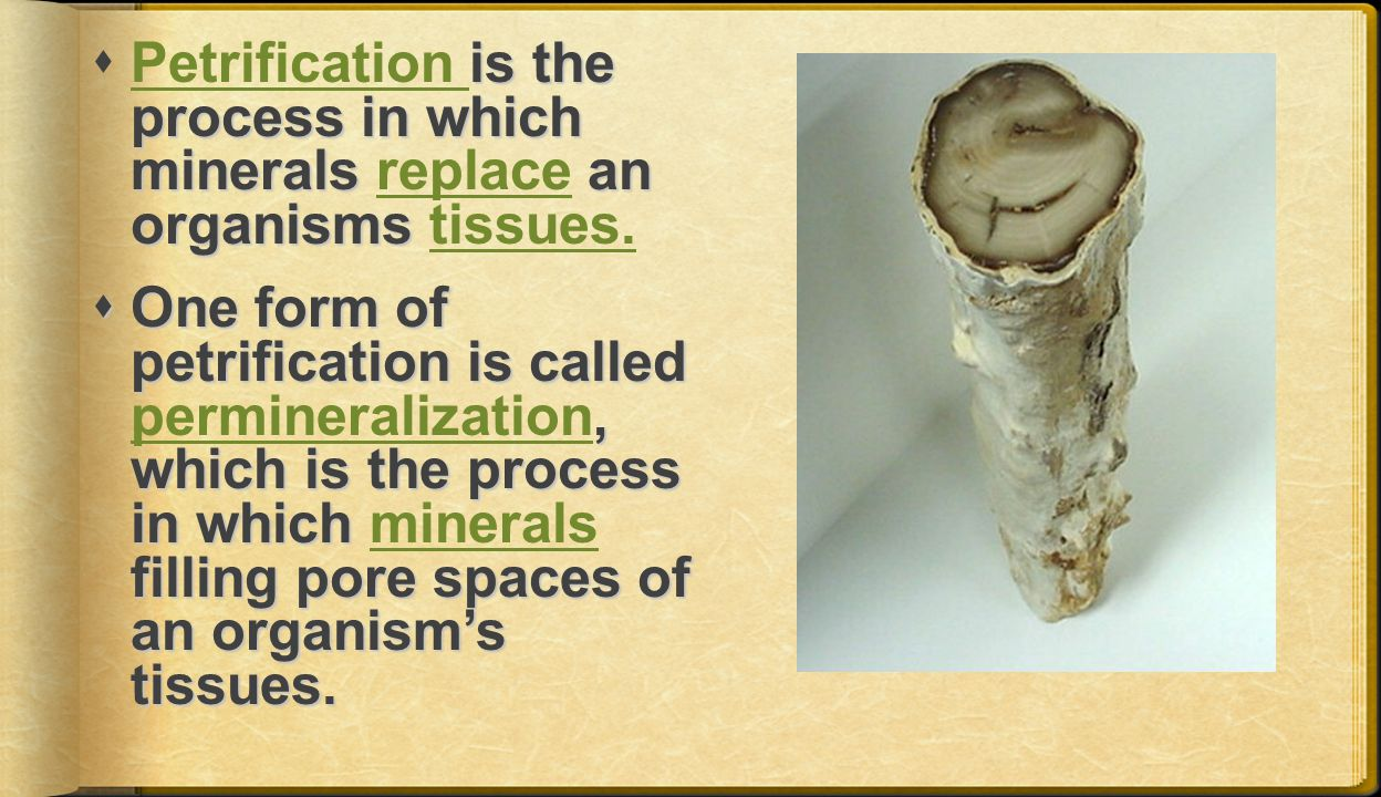 is the process in which minerals an organisms  Petrification is the process in which minerals replace an organisms tissues.