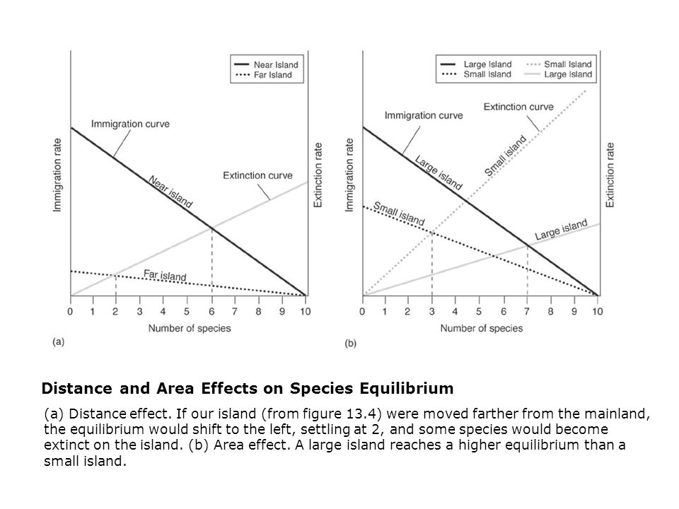 Distance and Area Effects on Species Equilibrium  (a) Distance effect.