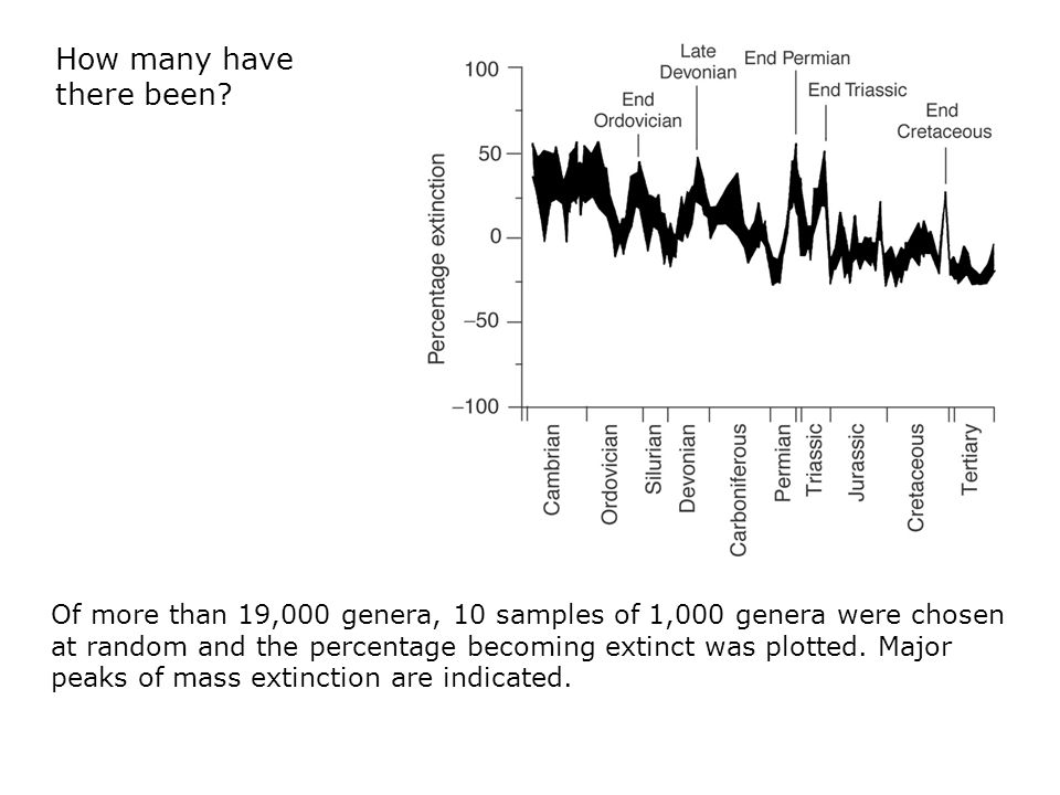  Of more than 19,000 genera, 10 samples of 1,000 genera were chosen at random and the percentage becoming extinct was plotted.