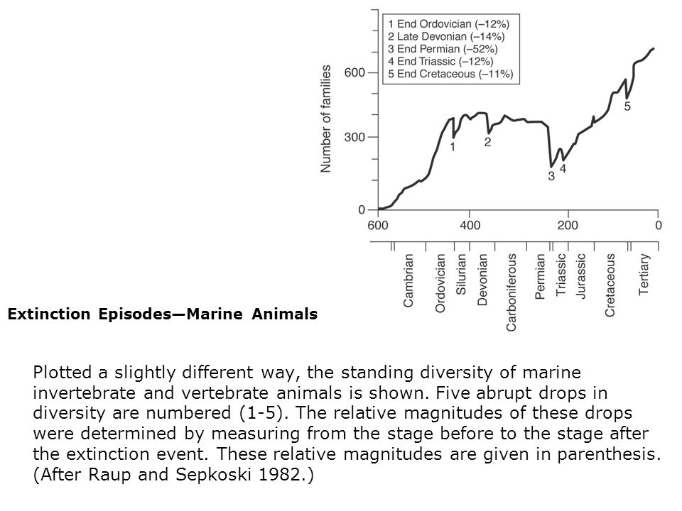 Extinction Episodes—Marine Animals  Plotted a slightly different way, the standing diversity of marine invertebrate and vertebrate animals is shown.