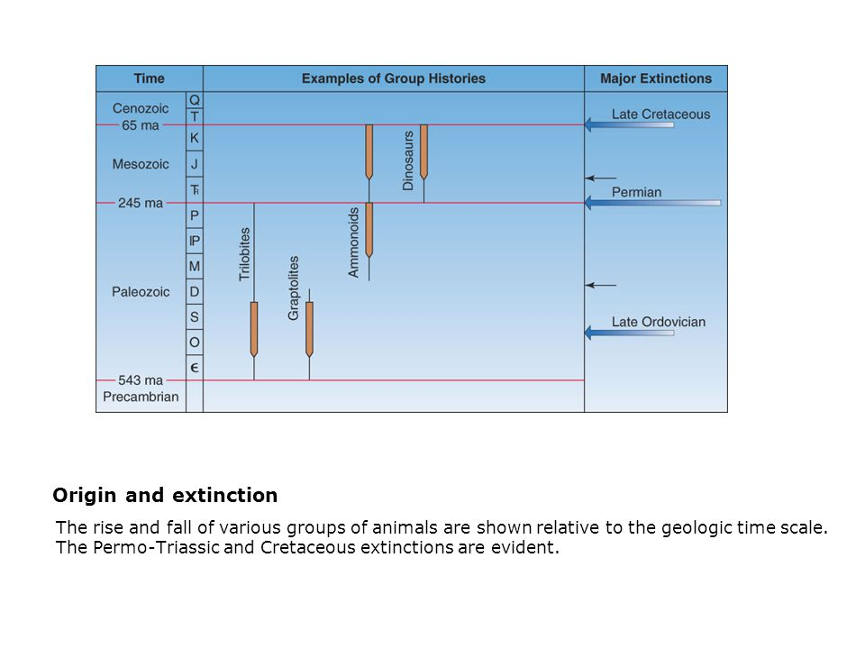 Origin and extinction  The rise and fall of various groups of animals are shown relative to the geologic time scale.