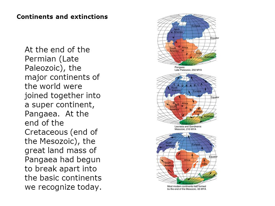 Continents and extinctions  At the end of the Permian (Late Paleozoic), the major continents of the world were joined together into a super continent, Pangaea.