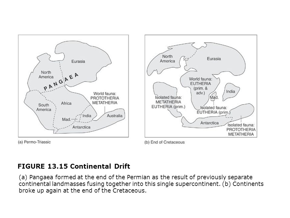 FIGURE 13.15 Continental Drift  (a) Pangaea formed at the end of the Permian as the result of previously separate continental landmasses fusing together into this single supercontinent.