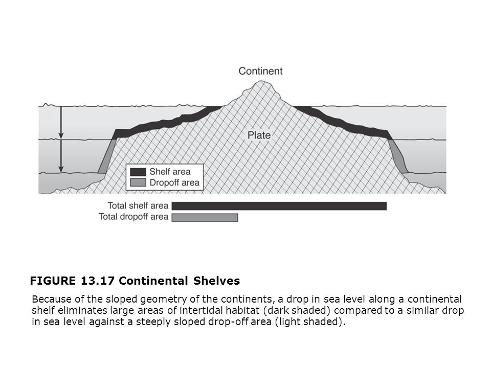 FIGURE 13.17 Continental Shelves  Because of the sloped geometry of the continents, a drop in sea level along a continental shelf eliminates large areas of intertidal habitat (dark shaded) compared to a similar drop in sea level against a steeply sloped drop-off area (light shaded).