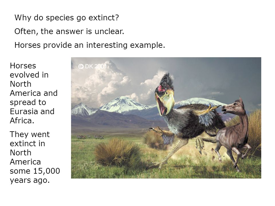 Why do species go extinct. Often, the answer is unclear.