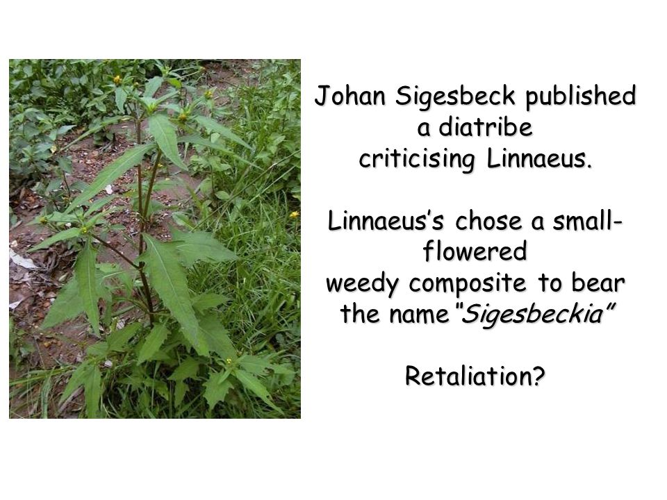 Johan Sigesbeck published a diatribe criticising Linnaeus.