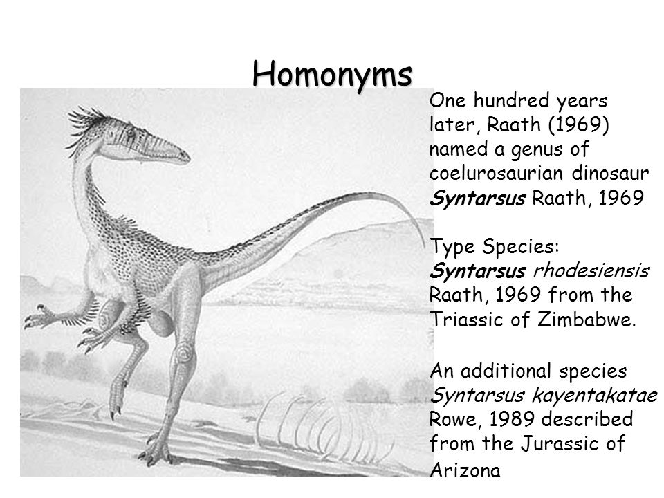 Homonyms One hundred years later, Raath (1969) named a genus of coelurosaurian dinosaur Syntarsus Raath, 1969 Type Species: Syntarsus rhodesiensis Raath, 1969 from the Triassic of Zimbabwe.