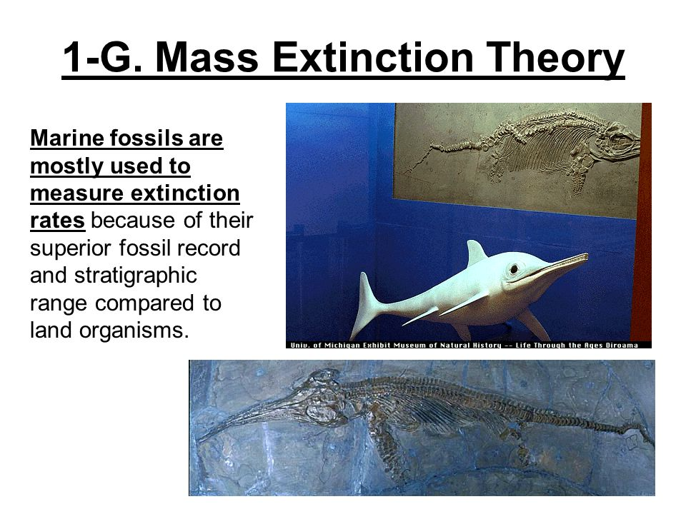 1-G. Mass Extinction Theory Marine fossils are mostly used to measure extinction rates because of their superior fossil record and stratigraphic range