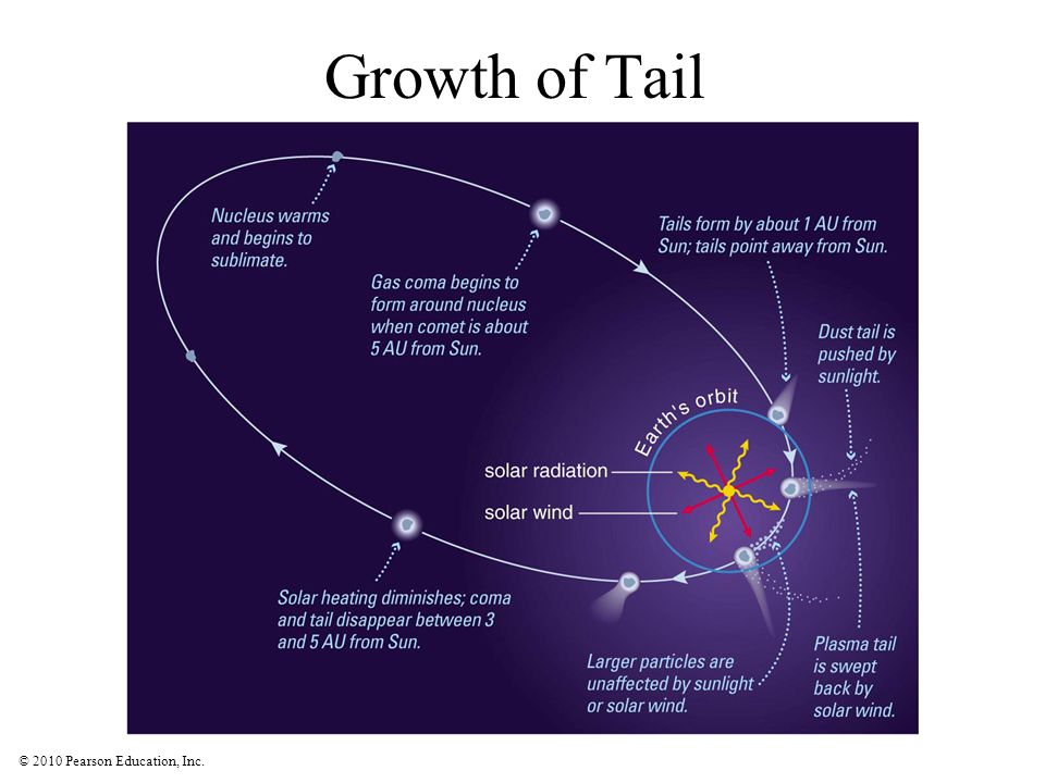© 2010 Pearson Education, Inc. Growth of Tail