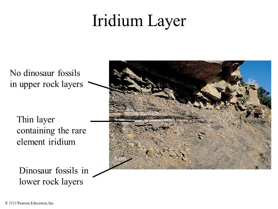 © 2010 Pearson Education, Inc. Iridium Layer Dinosaur fossils in lower rock layers No dinosaur fossils in upper rock layers Thin layer containing the