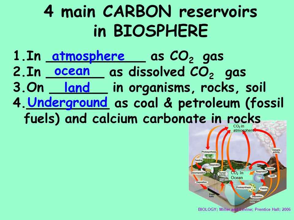 4 main CARBON reservoirs in BIOSPHERE CO 2 in atmosphere CO 2 in Ocean BIOLOGY; Miller and Levine; Prentice Hall; 2006 1.In ____________ as CO 2 gas 2