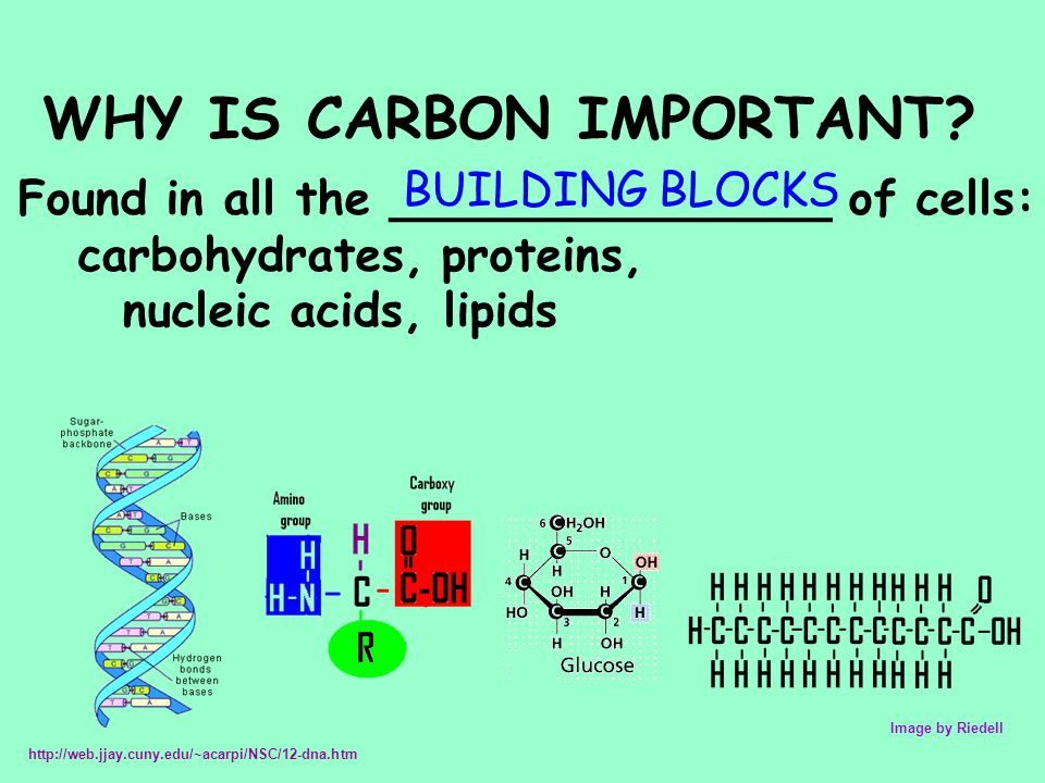 WHY IS CARBON IMPORTANT? Found in all the _______________ of cells: carbohydrates, proteins, nucleic acids, lipids Image by Riedell http://web.jjay.cu