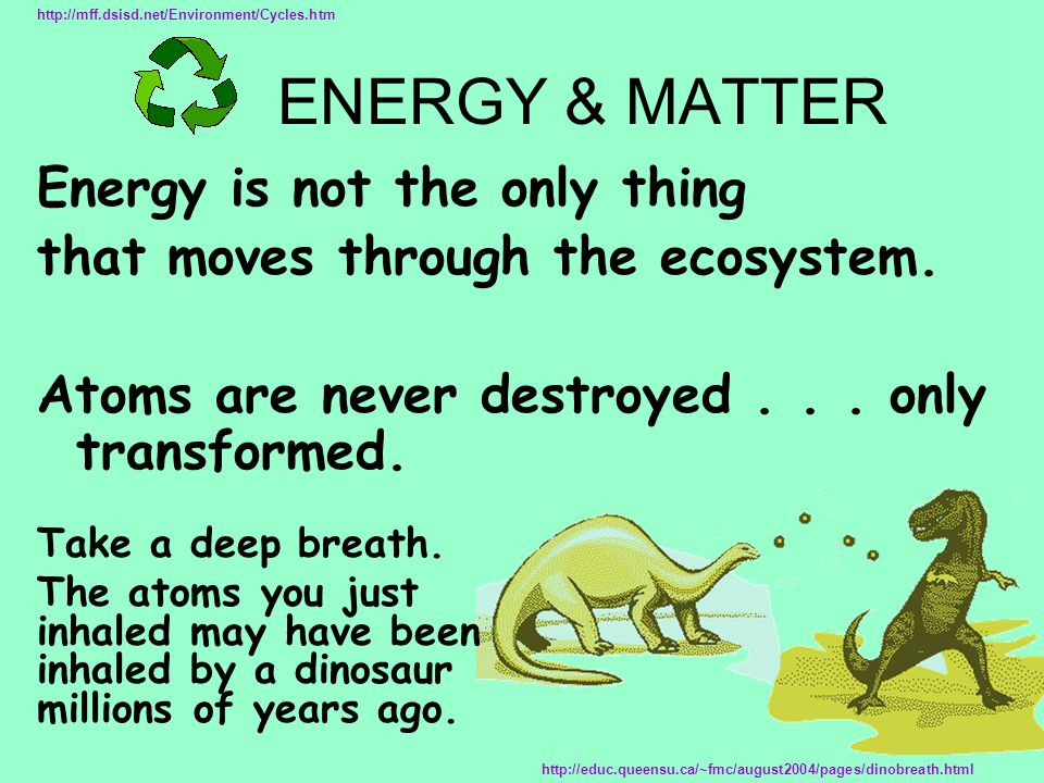 Energy is not the only thing that moves through the ecosystem. Atoms are never destroyed... only transformed. http://mff.dsisd.net/Environment/Cycles.