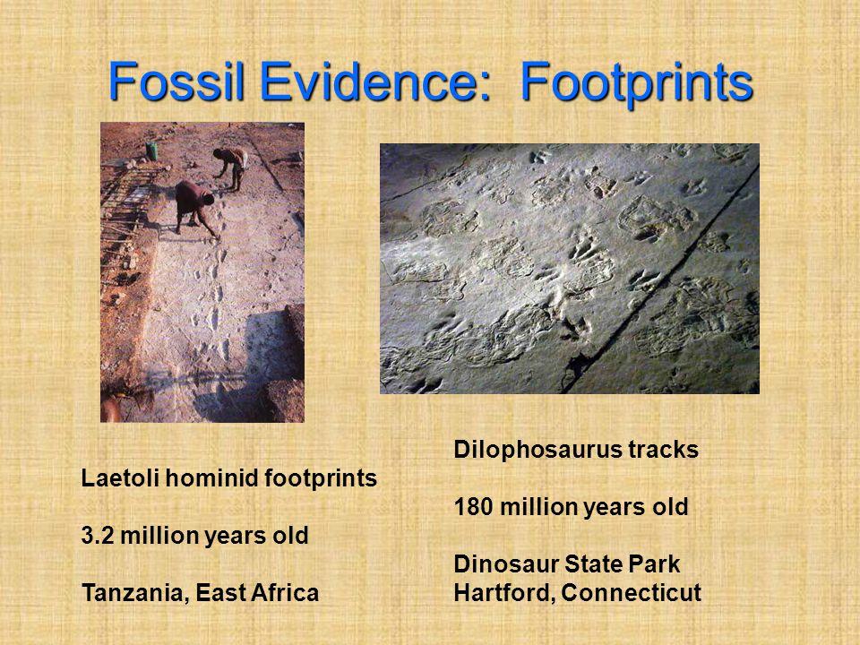Fossil Evidence: Footprints Laetoli hominid footprints 3.2 million years old Tanzania, East Africa Dilophosaurus tracks 180 million years old Dinosaur State Park Hartford, Connecticut
