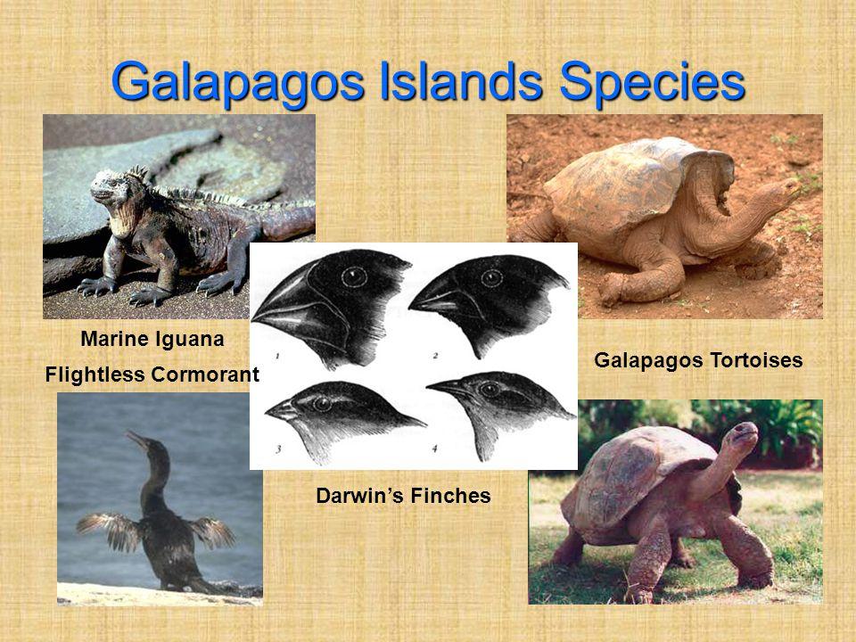 Galapagos Islands Species Marine Iguana Galapagos Tortoises Darwin's Finches Flightless Cormorant