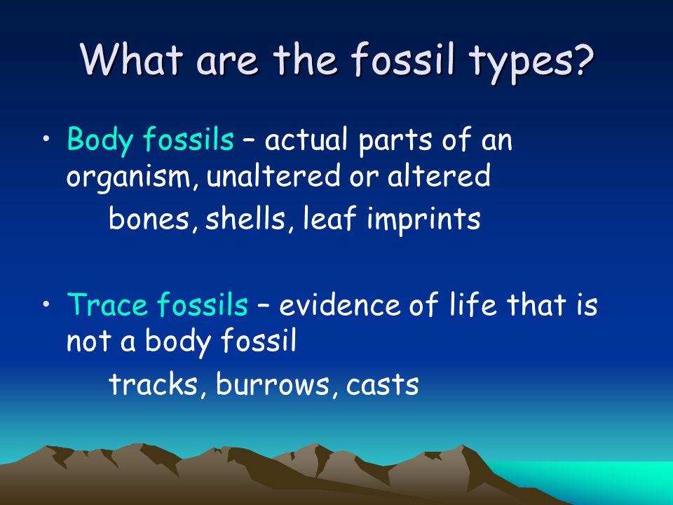 Body fossils