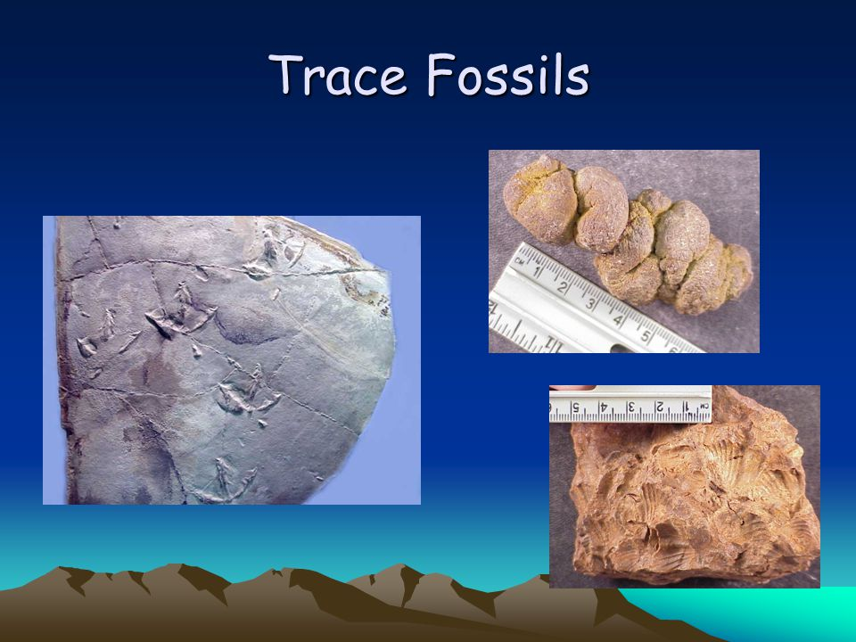 What are the modes of fossil preservation for body fossils.