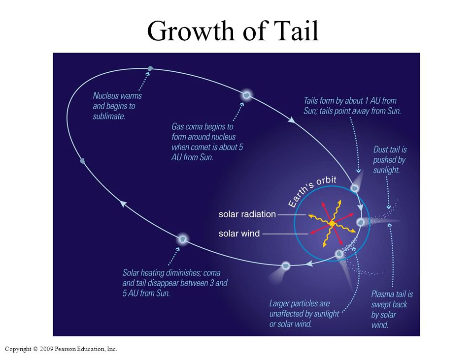 Copyright © 2009 Pearson Education, Inc. Growth of Tail