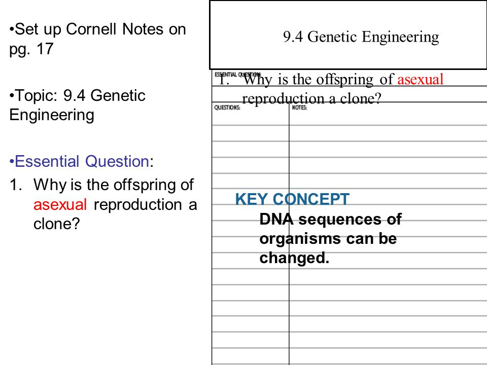 genetic engineering essay conclusion