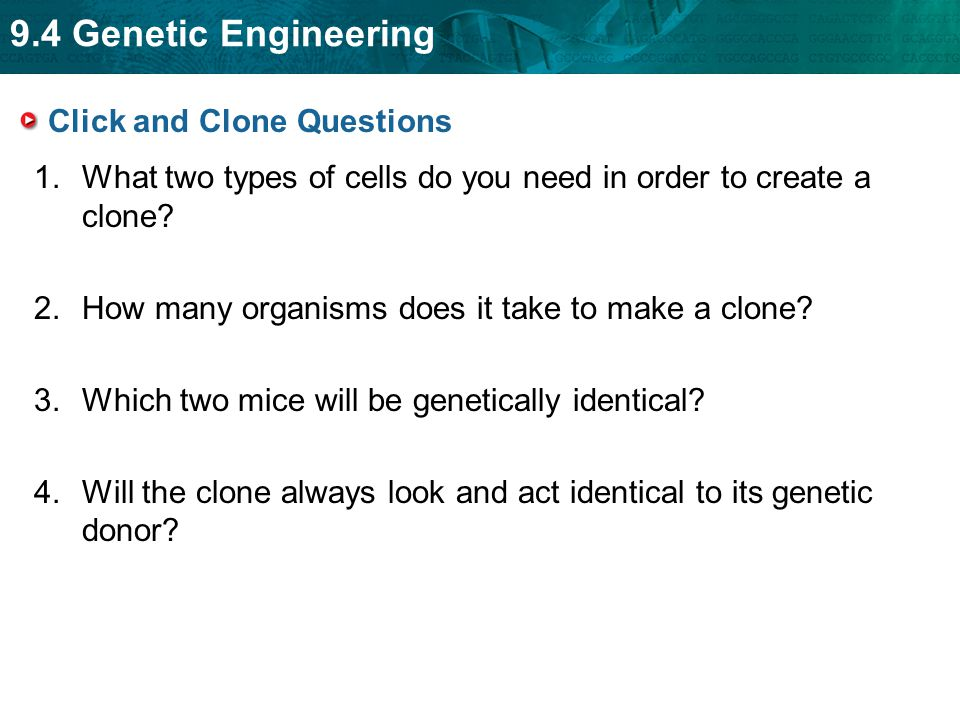 9.4 Genetic Engineering Click and Clone Questions 1.What two types of cells do you need in order to create a clone? 2.How many organisms does it take