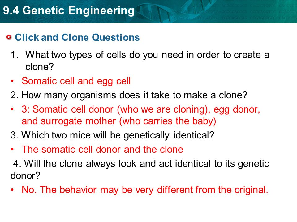 9.4 Genetic Engineering Click and Clone Questions 1.What two types of cells do you need in order to create a clone? Somatic cell and egg cell 2. How m