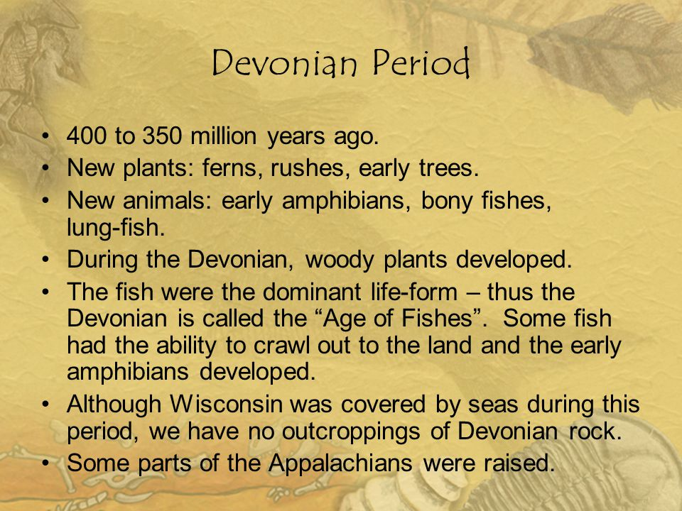 Devonian Period 400 to 350 million years ago. New plants: ferns, rushes, early trees. New animals: early amphibians, bony fishes, lung-fish. During th