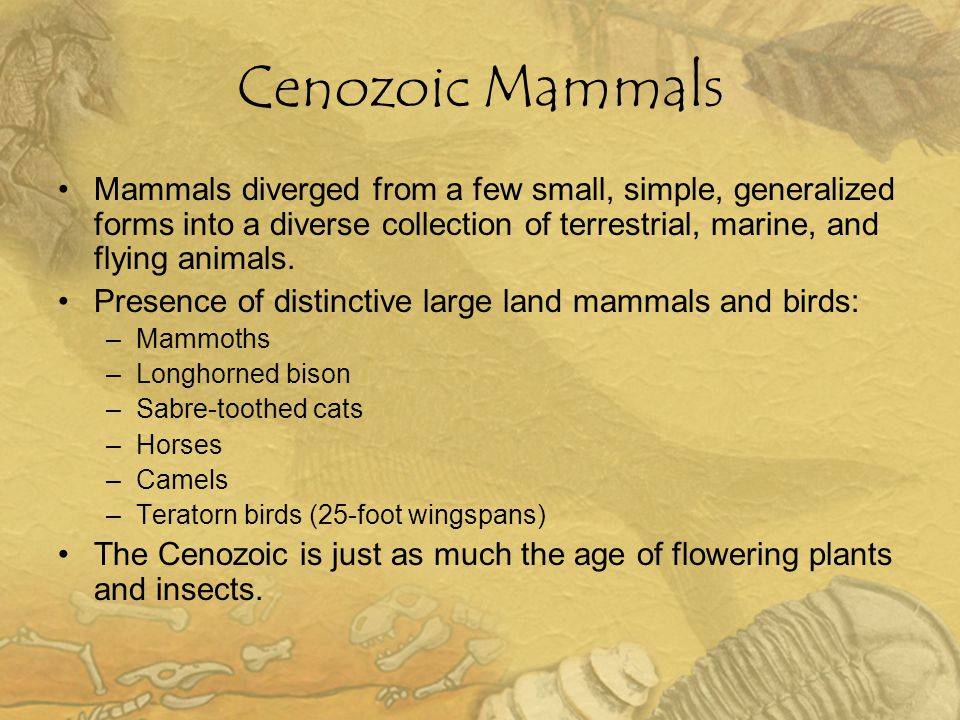 Cenozoic Mammals Mammals diverged from a few small, simple, generalized forms into a diverse collection of terrestrial, marine, and flying animals. Pr