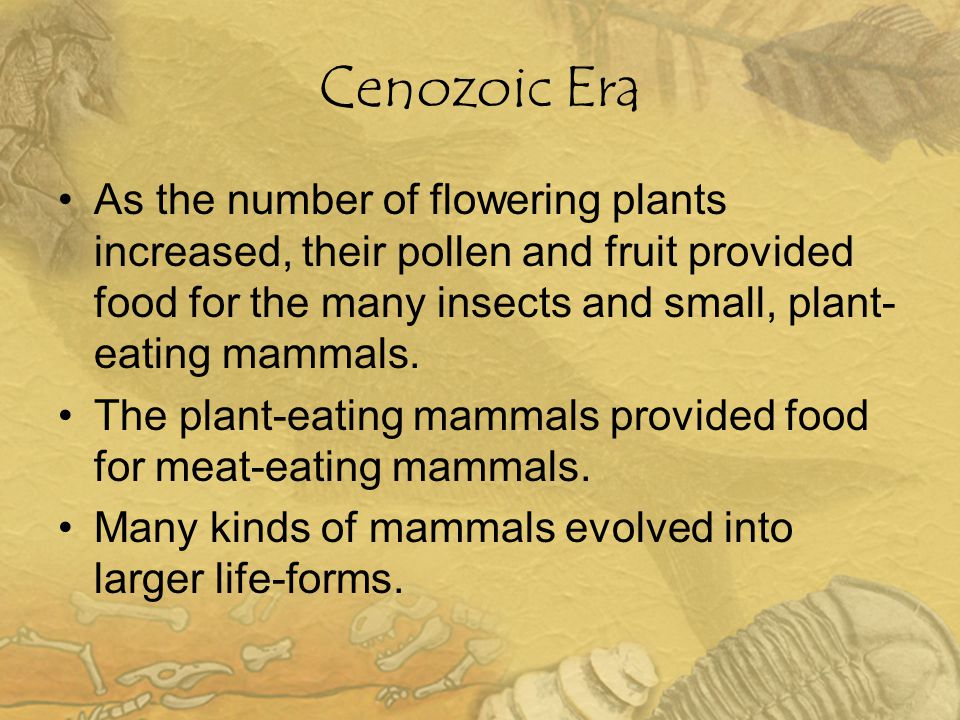 Cenozoic Era As the number of flowering plants increased, their pollen and fruit provided food for the many insects and small, plant- eating mammals.