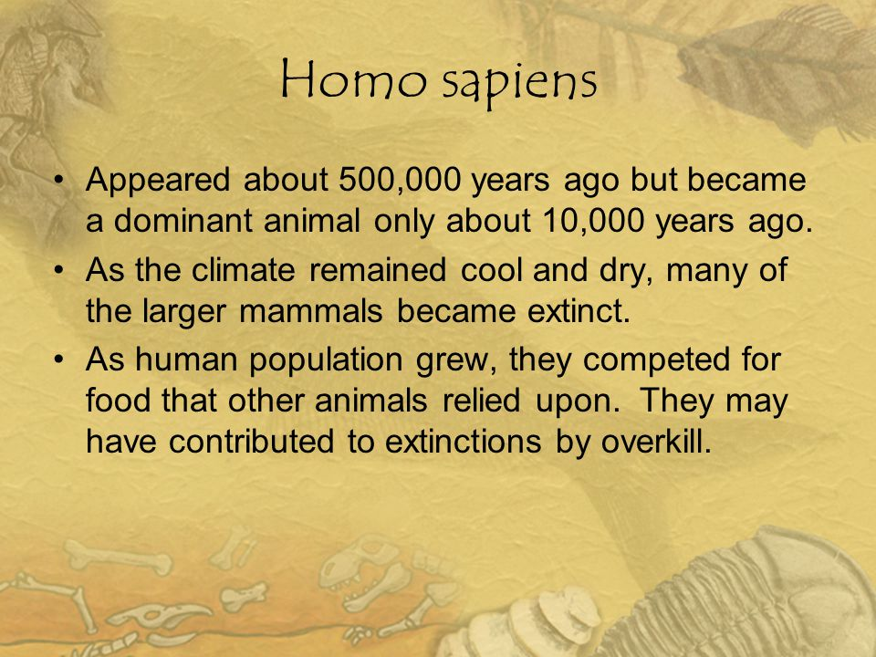 Homo sapiens Appeared about 500,000 years ago but became a dominant animal only about 10,000 years ago. As the climate remained cool and dry, many of